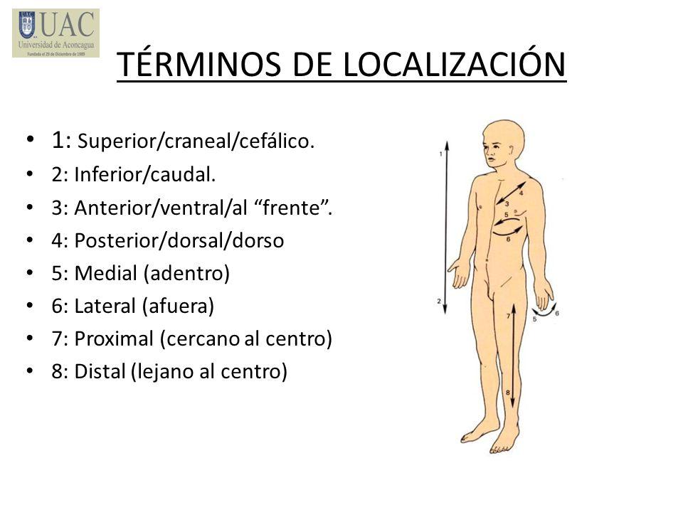 TÉRMINOS DE LOCALIZACIÓN 1: Superior/craneal/cefálico. 2: Inferior/caudal. 3: Anterior/ventral/al frente. 4: Posterior/dorsal/dorso 5: Medial (adentro