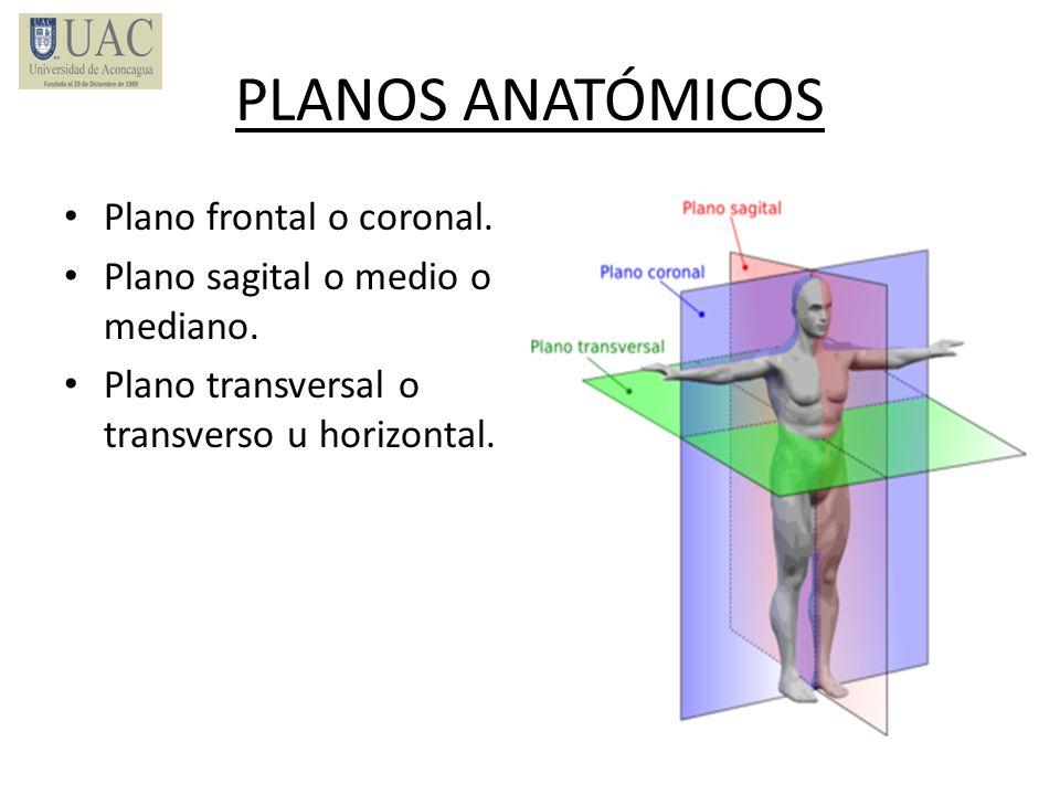 PLANOS ANATÓMICOS Plano frontal o coronal. Plano sagital o medio o mediano. Plano transversal o transverso u horizontal.