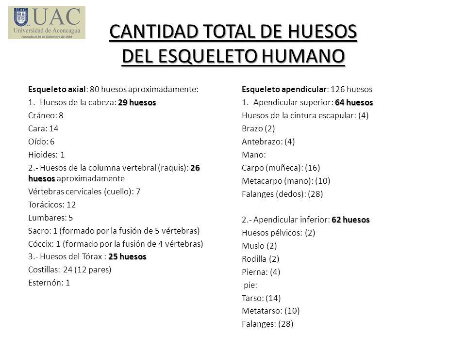 CANTIDAD TOTAL DE HUESOS DEL ESQUELETO HUMANO Esqueleto axial: 80 huesos aproximadamente: 29 huesos 1.- Huesos de la cabeza: 29 huesos Cráneo: 8 Cara: