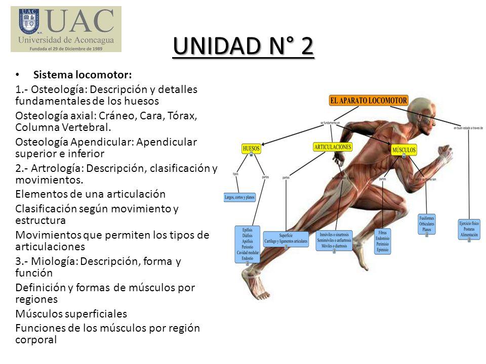 UNIDAD N° 2 Sistema locomotor: 1.- Osteología: Descripción y detalles fundamentales de los huesos Osteología axial: Cráneo, Cara, Tórax, Columna Verte