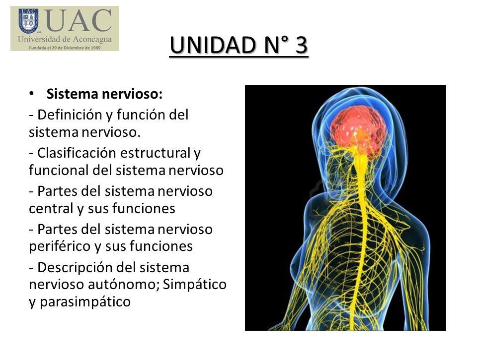 UNIDAD N° 3 Sistema nervioso: - Definición y función del sistema nervioso. - Clasificación estructural y funcional del sistema nervioso - Partes del s