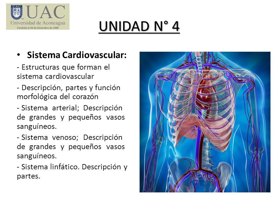 UNIDAD N° 4 Sistema Cardiovascular: - Estructuras que forman el sistema cardiovascular - Descripción, partes y función morfológica del corazón - Siste