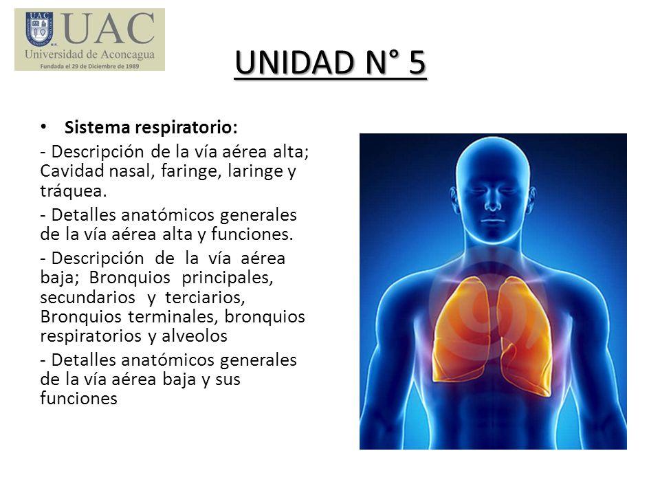UNIDAD N° 5 Sistema respiratorio: - Descripción de la vía aérea alta; Cavidad nasal, faringe, laringe y tráquea. - Detalles anatómicos generales de la