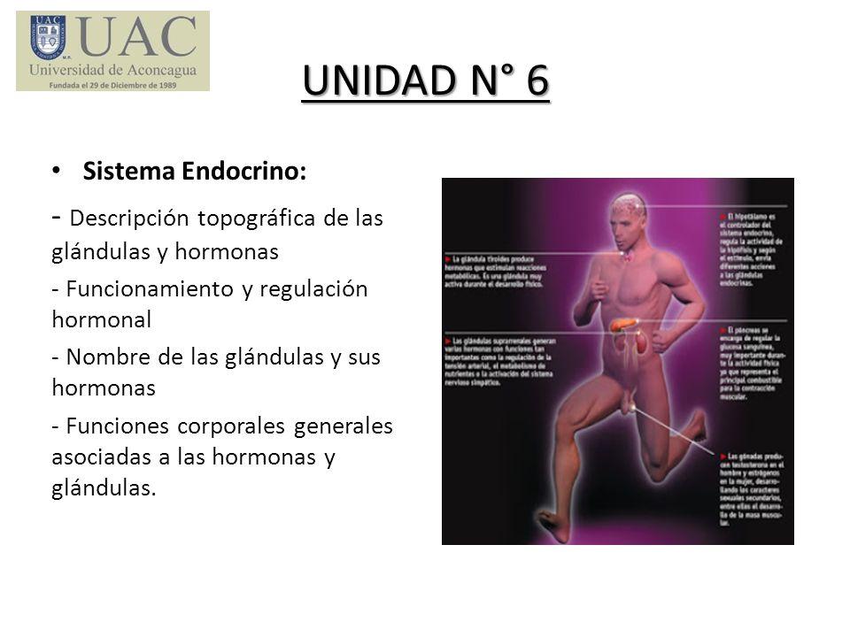 UNIDAD N° 6 Sistema Endocrino: - Descripción topográfica de las glándulas y hormonas - Funcionamiento y regulación hormonal - Nombre de las glándulas