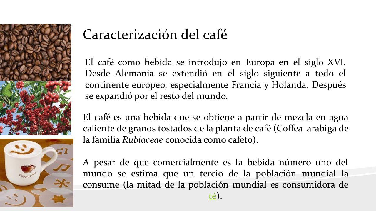 Caracterización del café El café como bebida se introdujo en Europa en el siglo XVI.