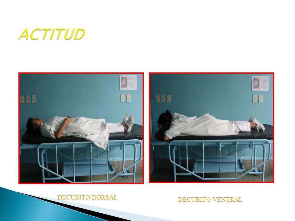 ACTITUD DECUBITO DORSAL DECUBITO VENTRAL