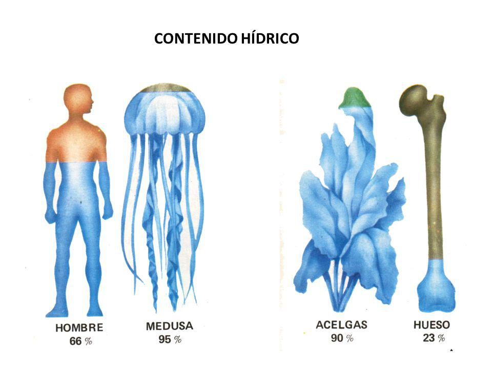 CONTENIDO HÍDRICO