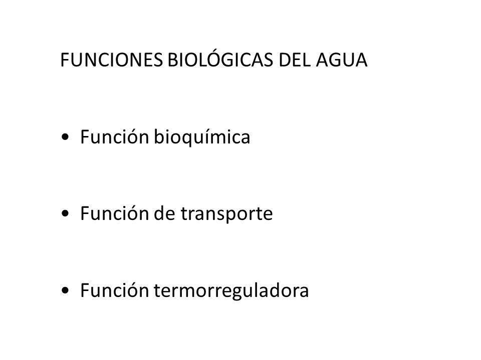 FUNCIONES BIOLÓGICAS DEL AGUA Función bioquímica Función de transporte Función termorreguladora