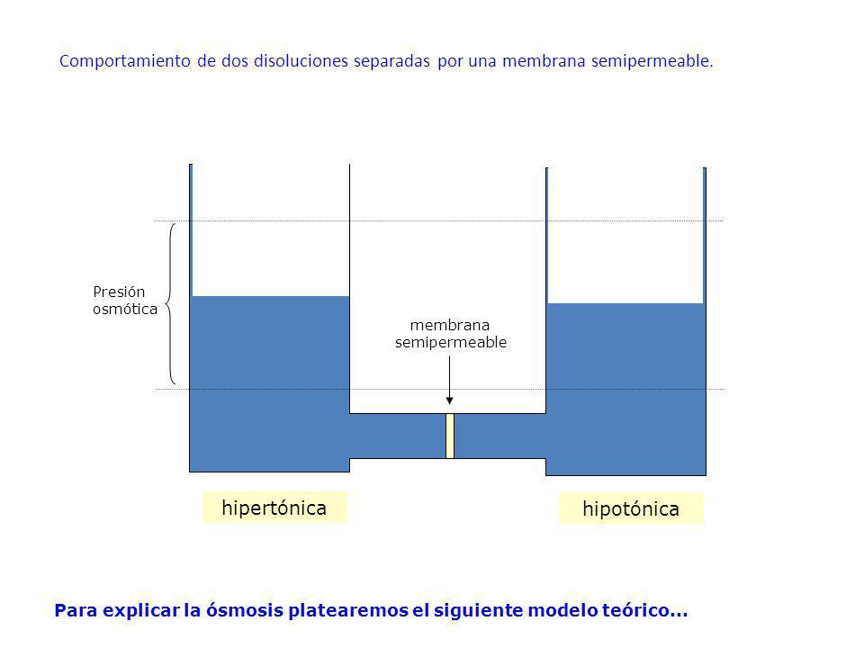 hipertónica hipotónica membrana semipermeable Comportamiento de dos disoluciones separadas por una membrana semipermeable. Presión osmótica Para expli