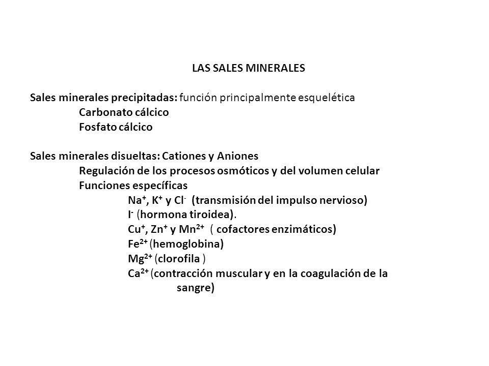 LAS SALES MINERALES Sales minerales precipitadas: función principalmente esquelética Carbonato cálcico Fosfato cálcico Sales minerales disueltas: Cationes y Aniones Regulación de los procesos osmóticos y del volumen celular Funciones específicas Na +, K + y Cl - (transmisión del impulso nervioso) I - (hormona tiroidea).