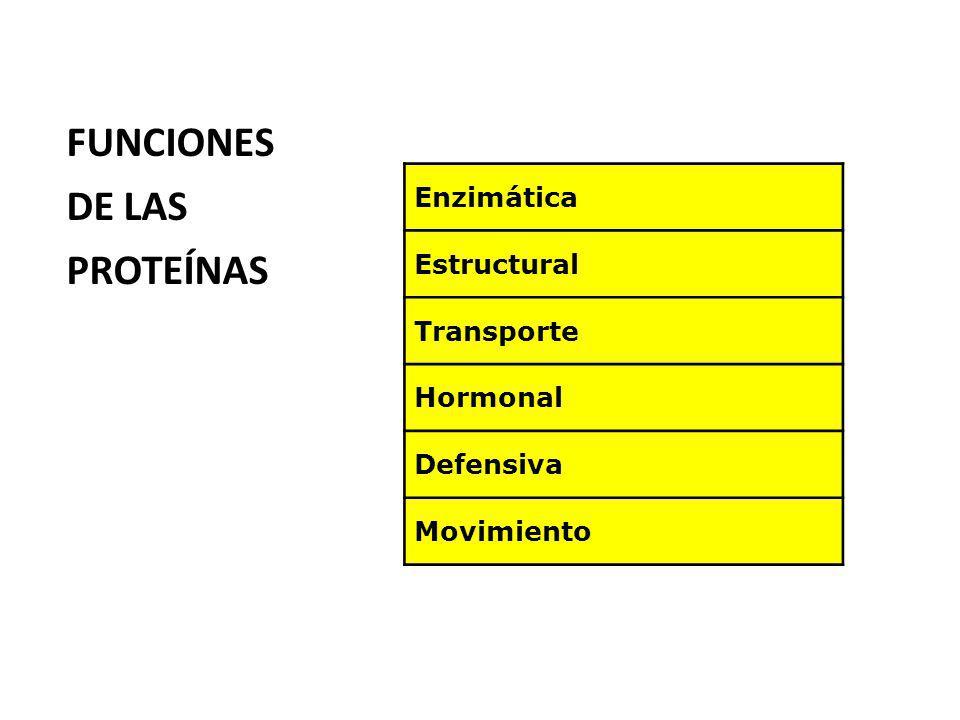 Enzimática Estructural Transporte Hormonal Defensiva Movimiento FUNCIONES DE LAS PROTEÍNAS
