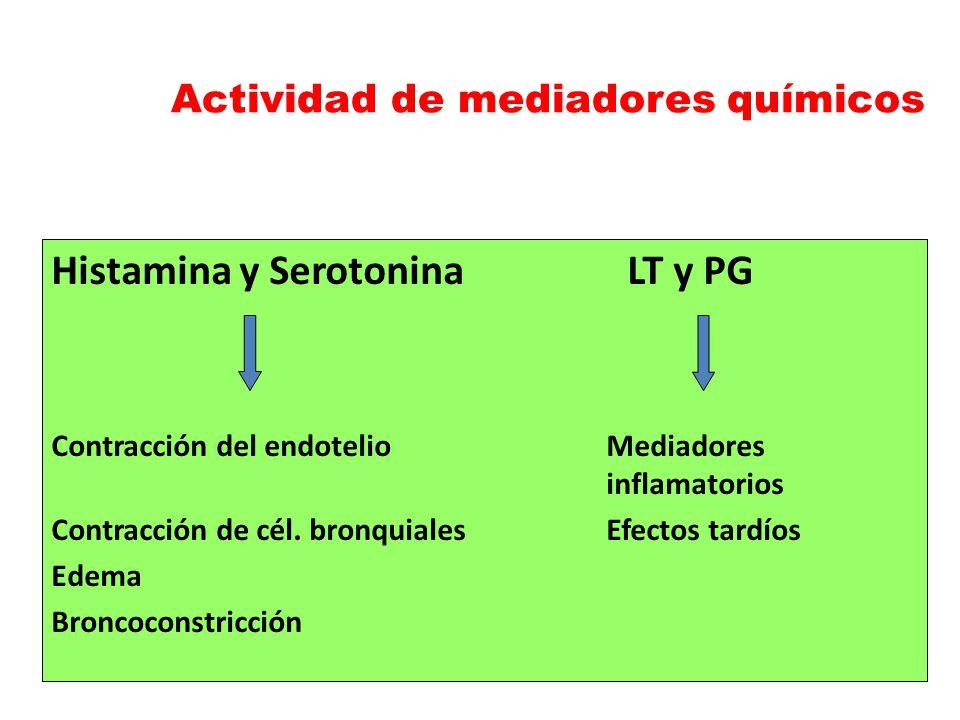 Histamina y SerotoninaLT y PG Contracción del endotelioMediadores inflamatorios Contracción de cél. bronquialesEfectos tardíos Edema Broncoconstricció