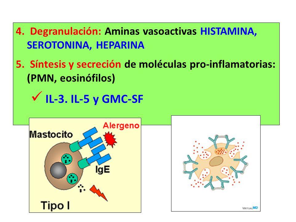 4. Degranulación: Aminas vasoactivas HISTAMINA, SEROTONINA, HEPARINA 5. Síntesis y secreción de moléculas pro-inflamatorias: (PMN, eosinófilos) IL-3.