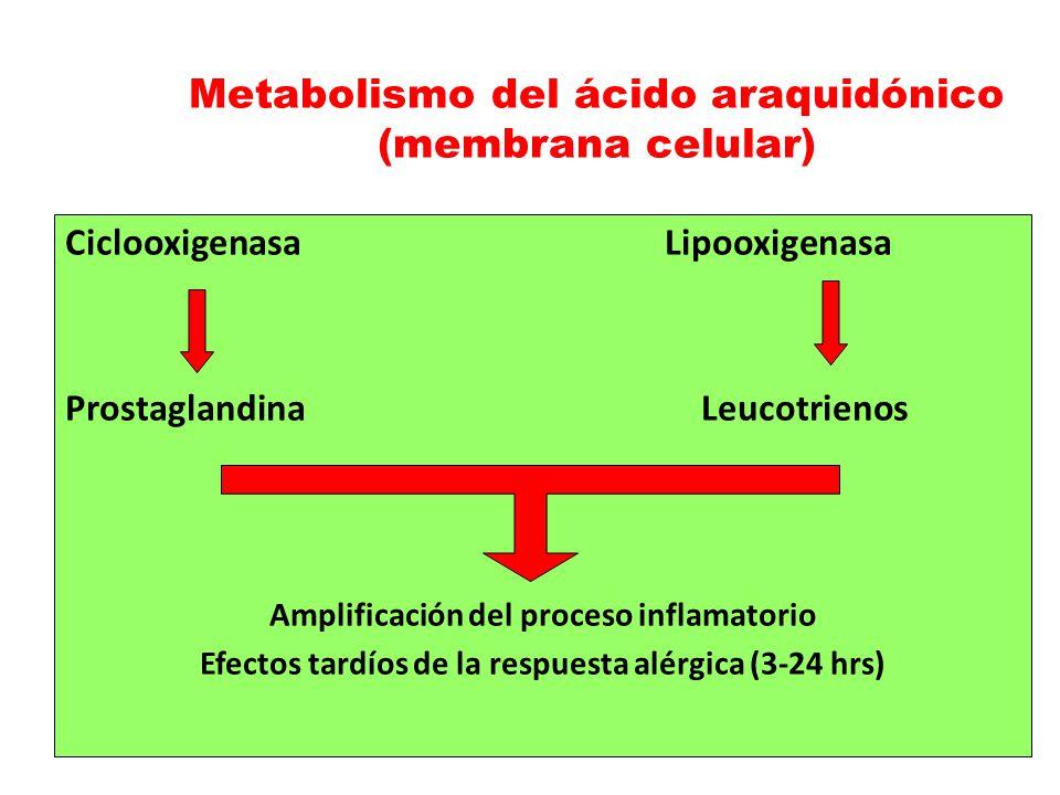 Ciclooxigenasa Lipooxigenasa ProstaglandinaLeucotrienos Amplificación del proceso inflamatorio Efectos tardíos de la respuesta alérgica (3-24 hrs) Met