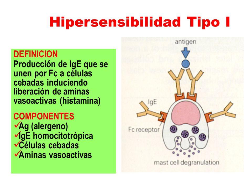 Hipersensibilidad Tipo I DEFINICION Producción de IgE que se unen por Fc a células cebadas induciendo liberación de aminas vasoactivas (histamina) COM