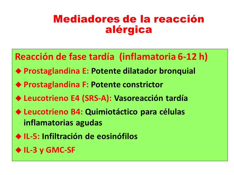Mediadores de la reacción alérgica Reacción de fase tardía (inflamatoria 6-12 h) Prostaglandina E: Potente dilatador bronquial Prostaglandina F: Poten