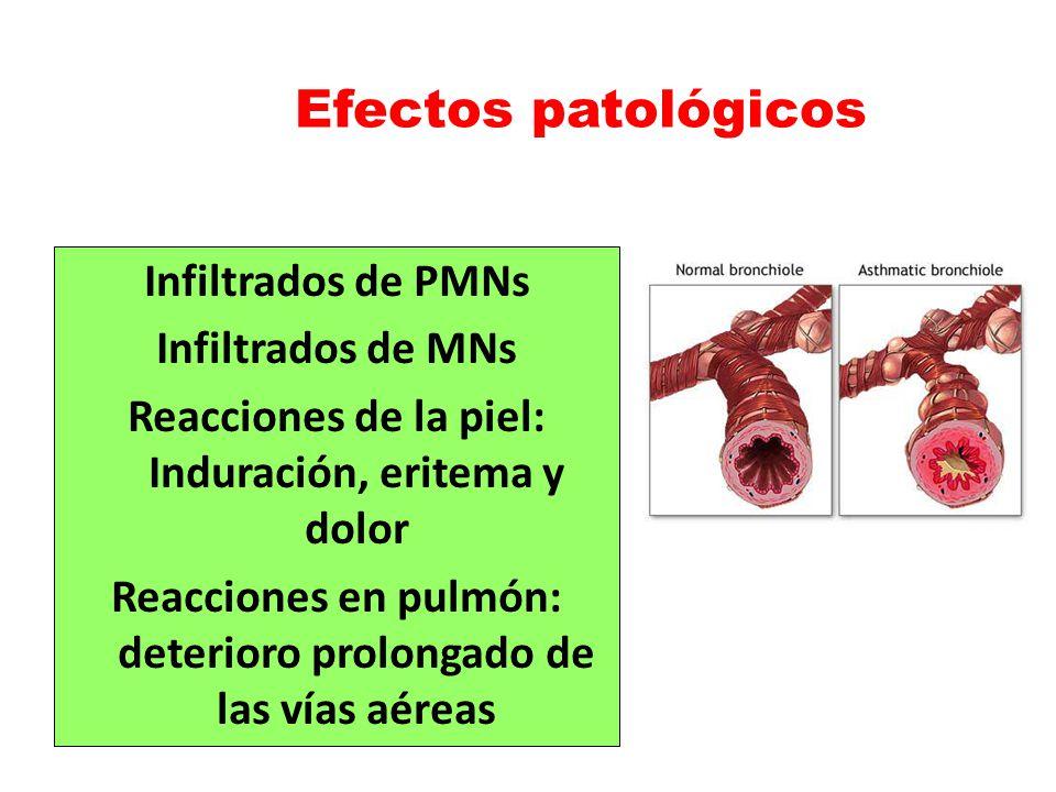 Efectos patológicos Infiltrados de PMNs Infiltrados de MNs Reacciones de la piel: Induración, eritema y dolor Reacciones en pulmón: deterioro prolonga