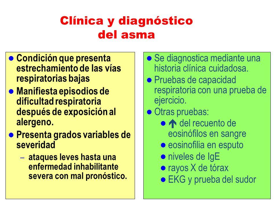 Clínica y diagnóstico del asma Condición que presenta estrechamiento de las vías respiratorias bajas Manifiesta episodios de dificultad respiratoria d
