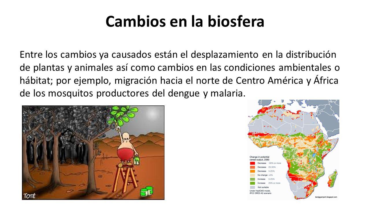 Cambios en la biosfera Entre los cambios ya causados están el desplazamiento en la distribución de plantas y animales así como cambios en las condiciones ambientales o hábitat; por ejemplo, migración hacia el norte de Centro América y África de los mosquitos productores del dengue y malaria.