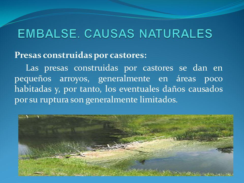 Presas construidas por castores: Las presas construidas por castores se dan en pequeños arroyos, generalmente en áreas poco habitadas y, por tanto, lo