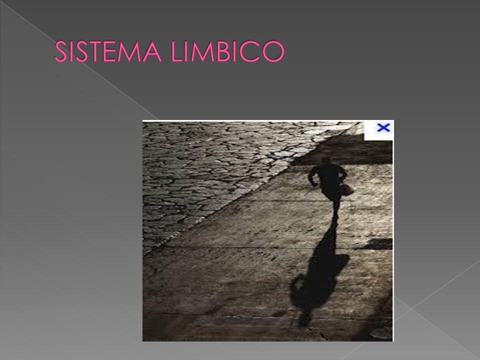 EL SISTEMA LÍMBICO ESTÁ FORMADO POR UN CONJUNTO DE ESTRUCTURAS IMPLICADAS EN EL CONTROL DE LAS EMOCIONES, DE LA MOTIVACIÓN Y DEL APRENDIZAJE Y LA MEMORIA.