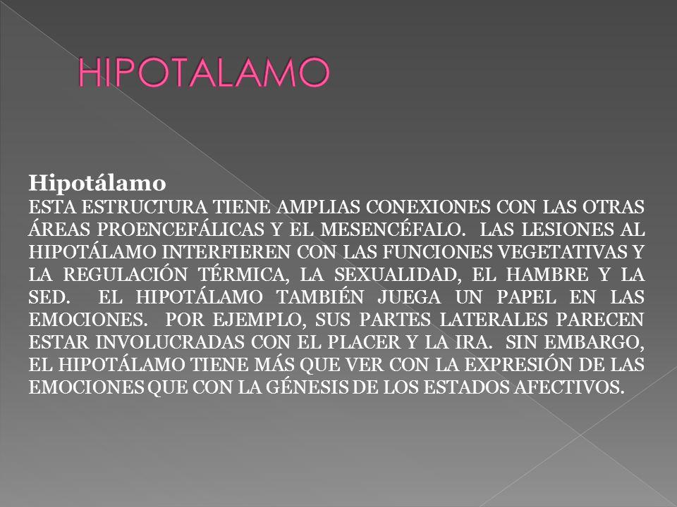 Hipotálamo ESTA ESTRUCTURA TIENE AMPLIAS CONEXIONES CON LAS OTRAS ÁREAS PROENCEFÁLICAS Y EL MESENCÉFALO.