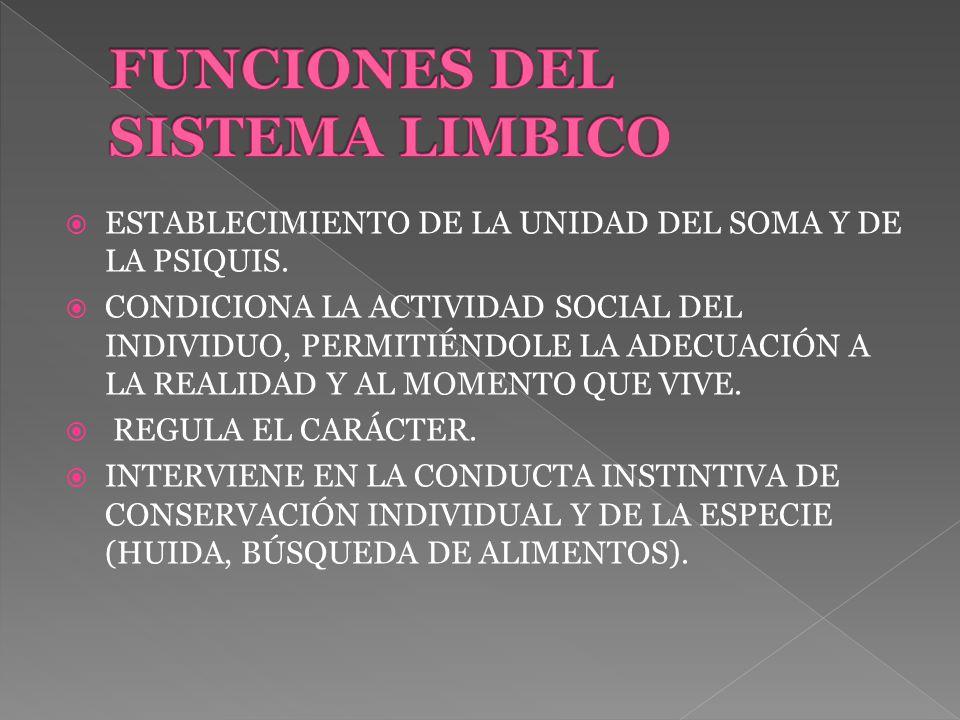 MODULA LAS FUNCIONES VISCERALES Y ENDÓCRINAS DEL ORGANISMO.