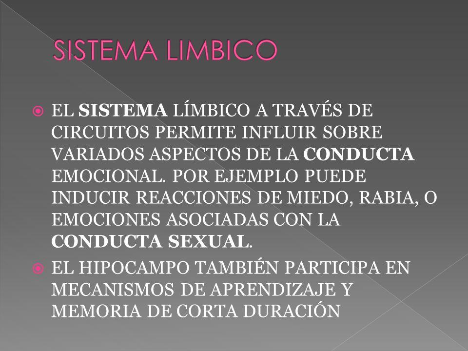EL SISTEMA LÍMBICO A TRAVÉS DE CIRCUITOS PERMITE INFLUIR SOBRE VARIADOS ASPECTOS DE LA CONDUCTA EMOCIONAL.
