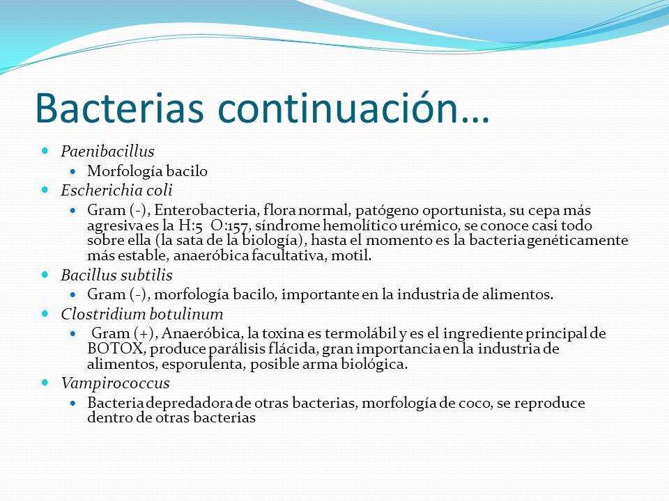Bacterias continuación… Paenibacillus Morfología bacilo Escherichia coli Gram (-), Enterobacteria, flora normal, patógeno oportunista, su cepa más agresiva es la H:5 O:157, síndrome hemolítico urémico, se conoce casi todo sobre ella (la sata de la biología), hasta el momento es la bacteria genéticamente más estable, anaeróbica facultativa, motil.