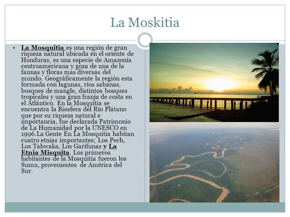 La Moskitia La Mosquitia es una región de gran riqueza natural ubicada en el oriente de Honduras, es una especie de Amazonía centroamericana y goza de una de la faunas y floras mas diversas del mundo.