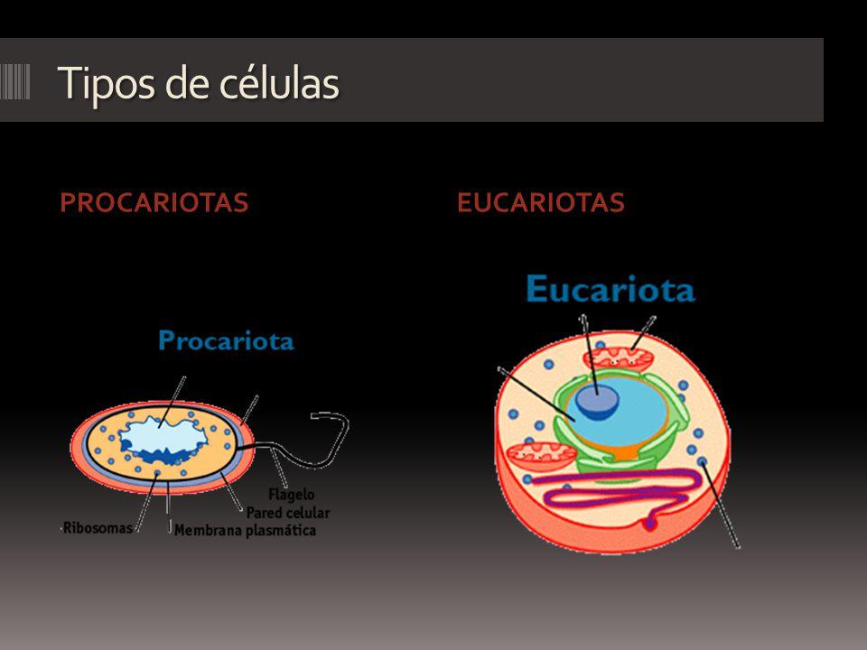 Tipos de células PROCARIOTASEUCARIOTAS
