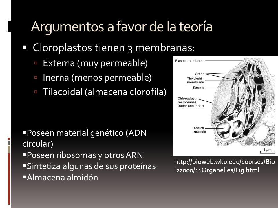 Argumentos a favor de la teoría Cloroplastos tienen 3 membranas: Externa (muy permeable) Inerna (menos permeable) Tilacoidal (almacena clorofila) Pose