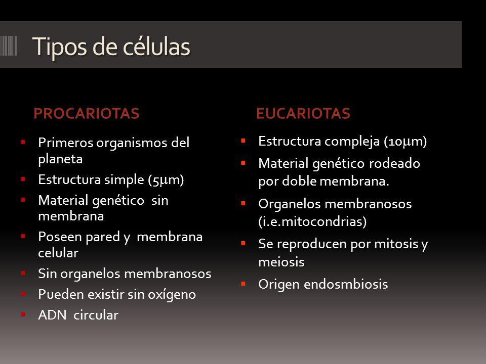 Tipos de células PROCARIOTASEUCARIOTAS Primeros organismos del planeta Estructura simple (5 m) Material genético sin membrana Poseen pared y membrana