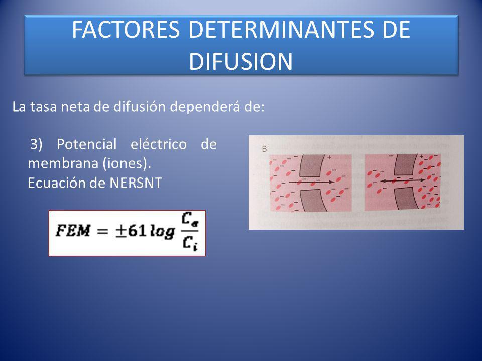 FACTORES DETERMINANTES DE DIFUSION La tasa neta de difusión dependerá de: 3) Potencial eléctrico de membrana (iones). Ecuación de NERSNT Fig. 4 – 8 (c