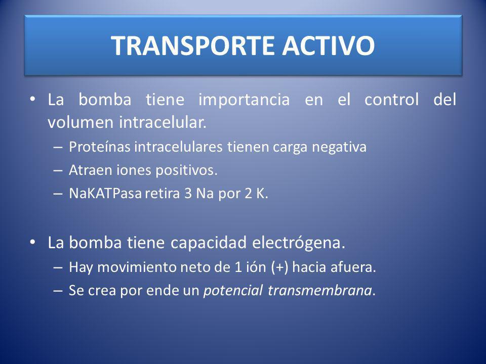 TRANSPORTE ACTIVO La bomba tiene importancia en el control del volumen intracelular. – Proteínas intracelulares tienen carga negativa – Atraen iones p