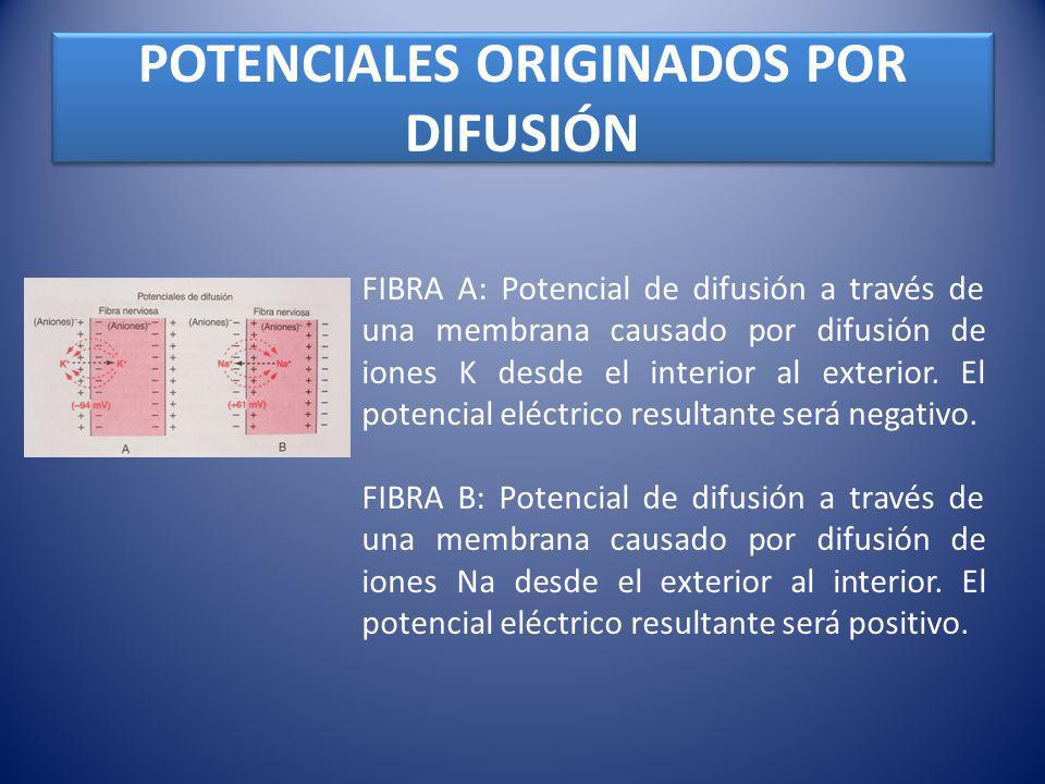 POTENCIALES ORIGINADOS POR DIFUSIÓN FIBRA A: Potencial de difusión a través de una membrana causado por difusión de iones K desde el interior al exter