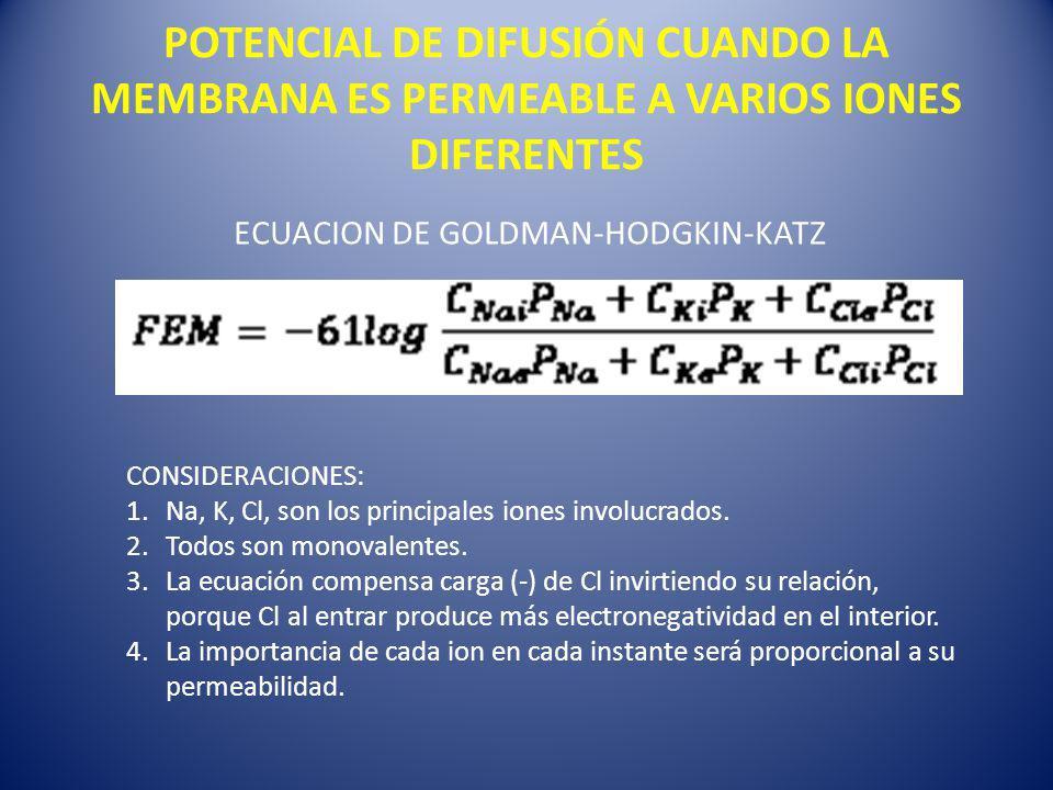 ECUACION DE GOLDMAN-HODGKIN-KATZ CONSIDERACIONES: 1.Na, K, Cl, son los principales iones involucrados. 2.Todos son monovalentes. 3.La ecuación compens