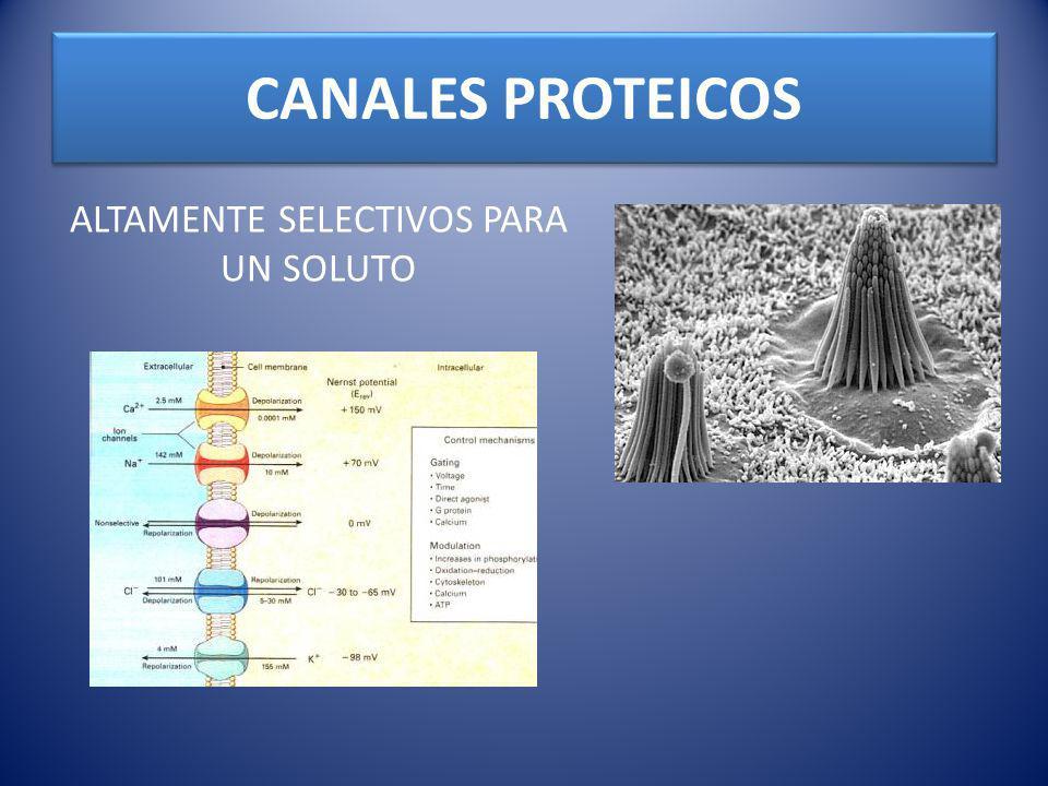 CANALES PROTEICOS ALTAMENTE SELECTIVOS PARA UN SOLUTO