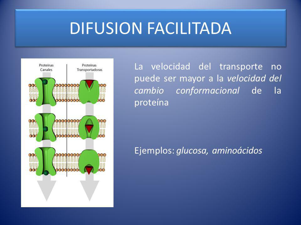 DIFUSION FACILITADA La velocidad del transporte no puede ser mayor a la velocidad del cambio conformacional de la proteína Ejemplos: glucosa, aminoáci