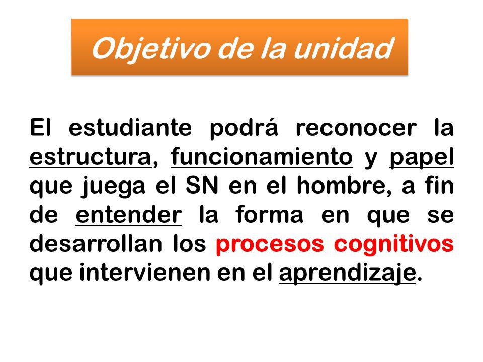 Objetivo de la unidad El estudiante podrá reconocer la estructura, funcionamiento y papel que juega el SN en el hombre, a fin de entender la forma en