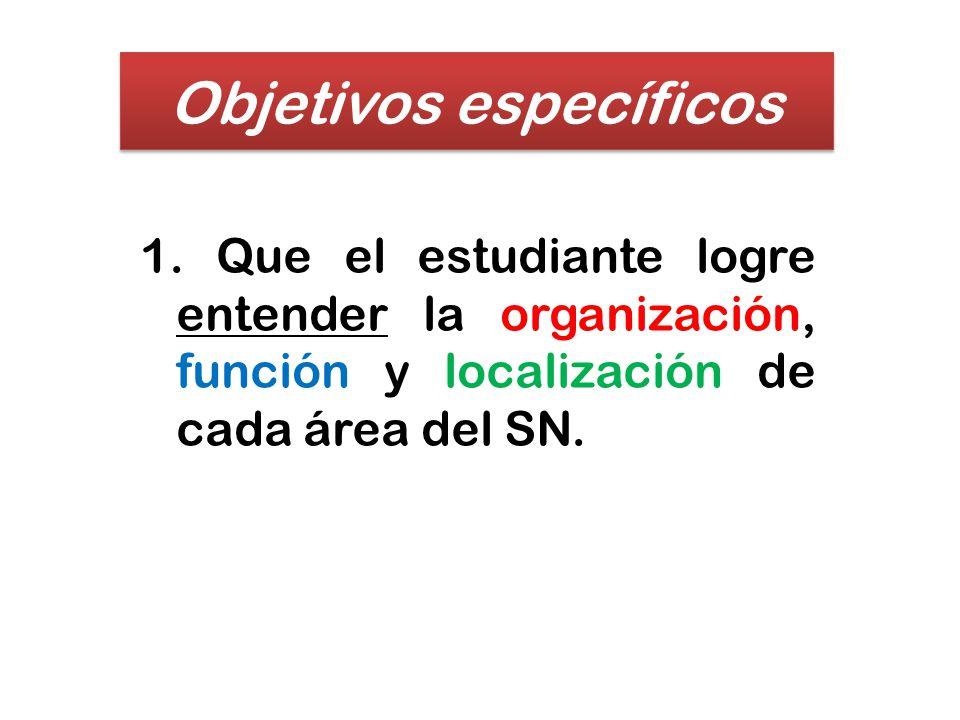 Objetivos específicos 1. Que el estudiante logre entender la organización, función y localización de cada área del SN.