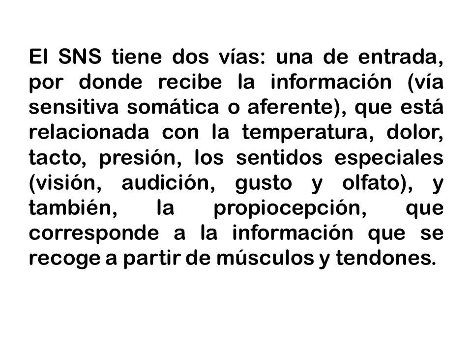 El SNS tiene dos vías: una de entrada, por donde recibe la información (vía sensitiva somática o aferente), que está relacionada con la temperatura, d