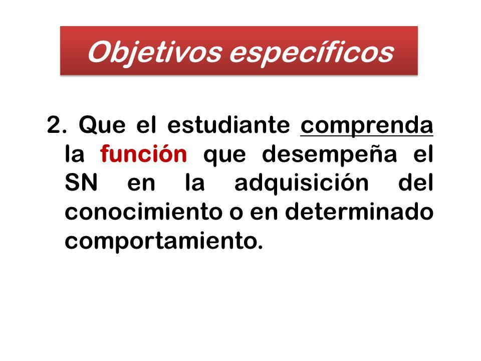 2. Que el estudiante comprenda la función que desempeña el SN en la adquisición del conocimiento o en determinado comportamiento. Objetivos específico