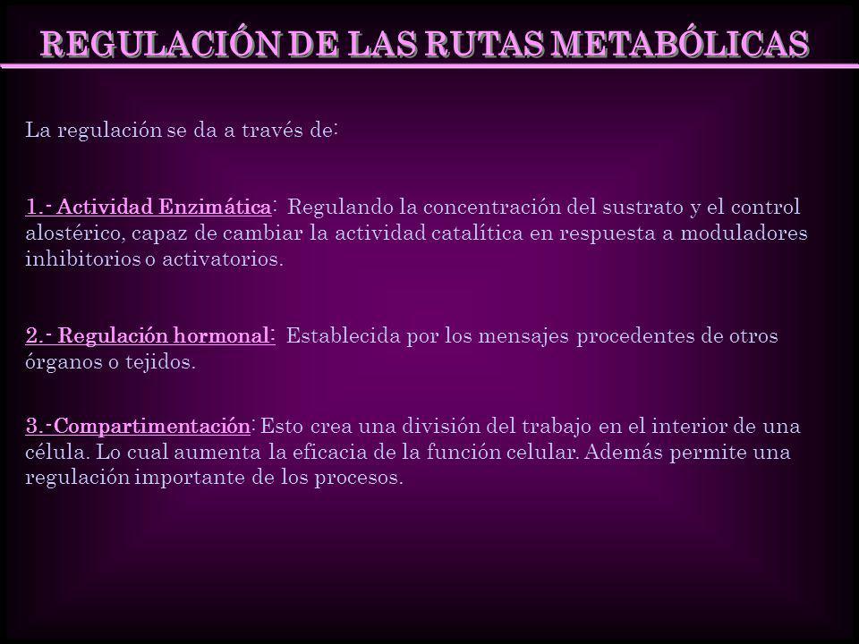 REGULACIÓN DE LAS RUTAS METABÓLICAS La regulación se da a través de: 1.- Actividad Enzimática: Regulando la concentración del sustrato y el control al