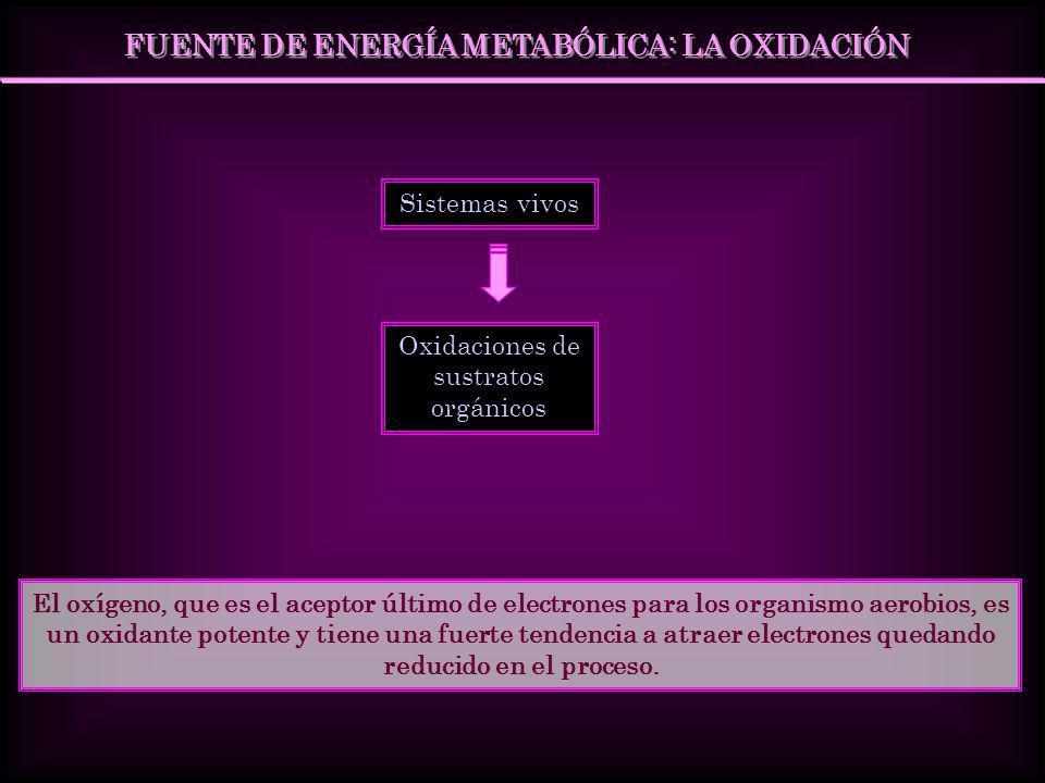 FUENTE DE ENERGÍA METABÓLICA: LA OXIDACIÓN Sistemas vivos Oxidaciones de sustratos orgánicos El oxígeno, que es el aceptor último de electrones para l