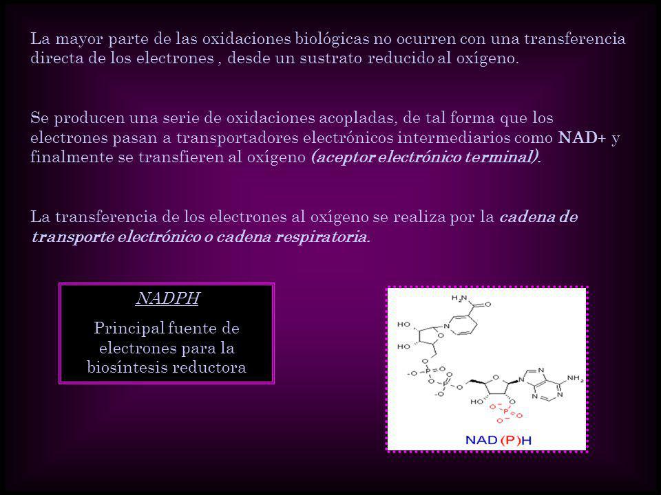 La mayor parte de las oxidaciones biológicas no ocurren con una transferencia directa de los electrones, desde un sustrato reducido al oxígeno. Se pro
