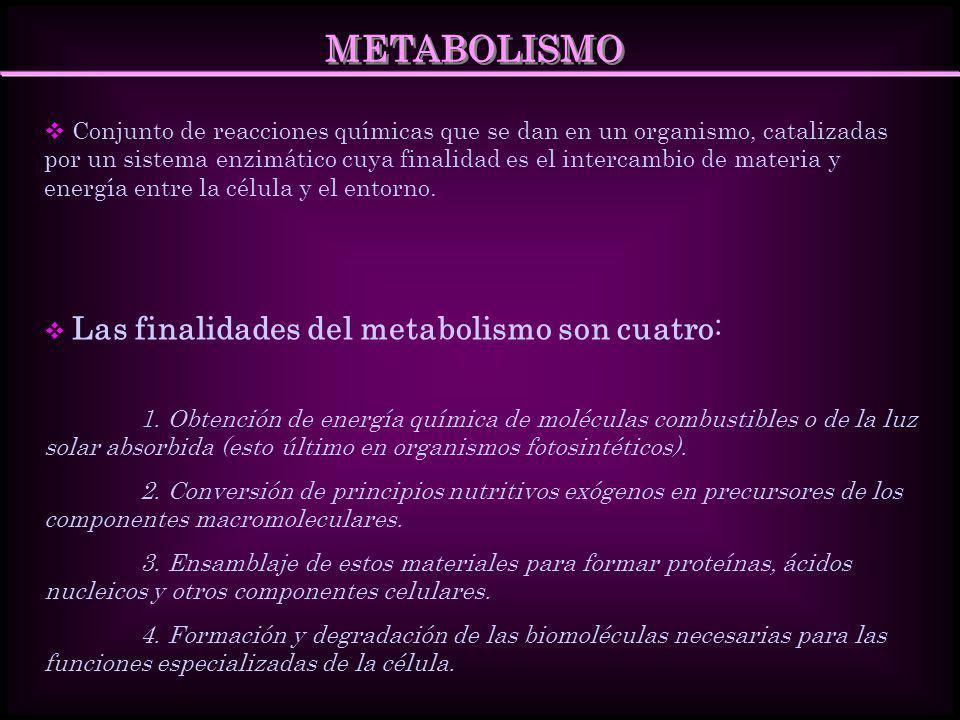 ESTRATEGIAS BÁSICAS DEL METABOLISMO Existen dos principios importantes en el metabolismo: 1.El metabolismo puede dividirse en tres categorías principales Catabolismo: procesos relacionados con la degradación de las sustancias complejas.