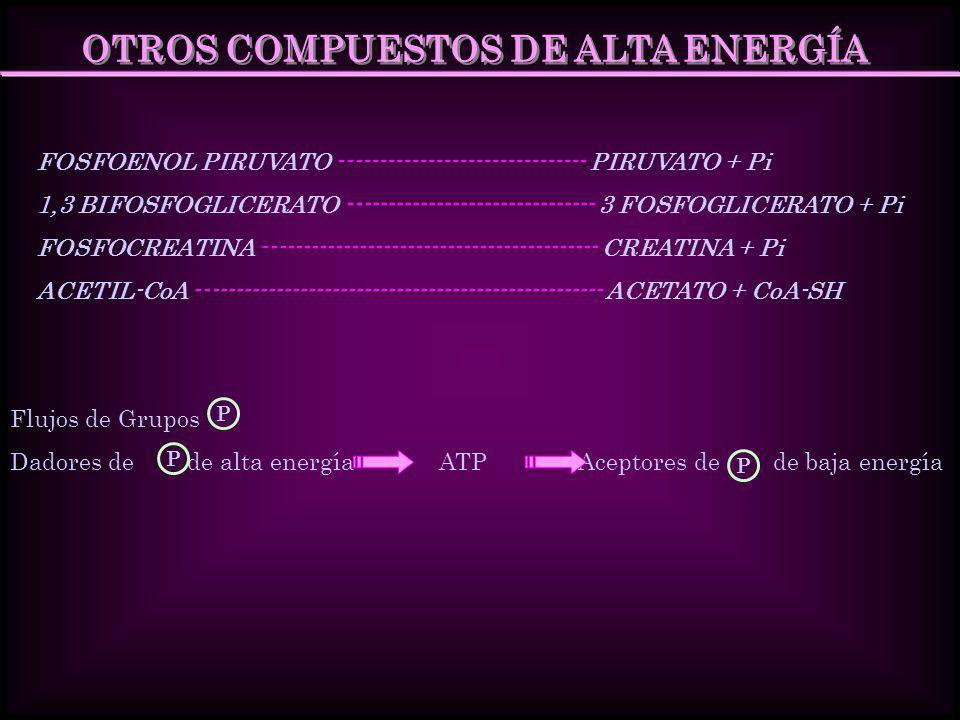 OTROS COMPUESTOS DE ALTA ENERGÍA FOSFOENOL PIRUVATO ------------------------------- PIRUVATO + Pi 1,3 BIFOSFOGLICERATO -------------------------------