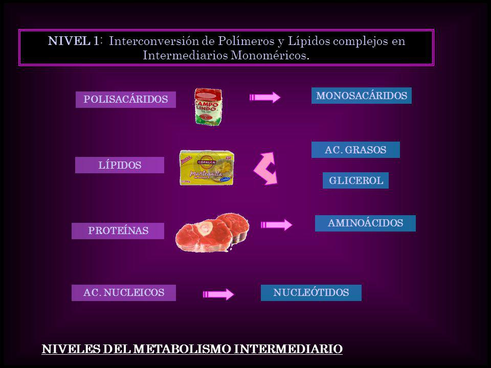 NIVEL 1: Interconversión de Polímeros y Lípidos complejos en Intermediarios Monoméricos. POLISACÁRIDOS PROTEÍNAS LÍPIDOS AC. NUCLEICOS MONOSACÁRIDOS A