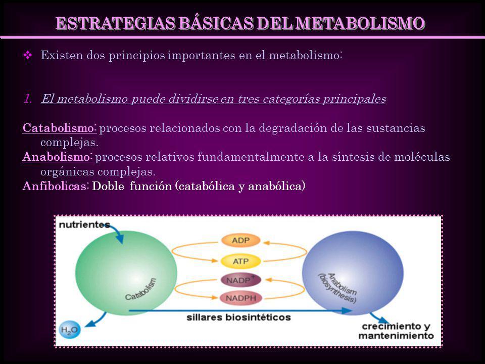 PRINCIPALES CARACTERÍSTICAS DEL CATABOLISMO Y DEL ANABOLISMO Nutrientes Productores de energía Glúcidos Grasas Proteínas Macromoléculas Celulares Proteínas Lípidos Polisacáridos Ácidos Nucleicos Catabolismo Anabolismo ADP + Pi NAD + NADP + ATP NADH NADPH Energía Química Productos poco energéticos CO 2, H 2 O,NH3 Moléculas Precursora Aminoácidos, azúcares, ácido grasos bases nitrogenadas.